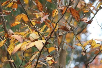秋の枯れ葉