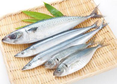 EPA豊富な青魚