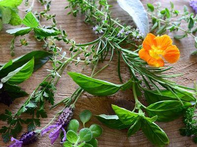 肌に優しい植物成分が抽出できる様々な植物