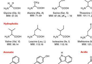 アミノ酸の元素記号