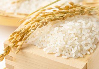 ライス発酵液が抽出できるお米