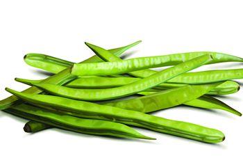 グアーガム分解物が抽出できるグアーの豆
