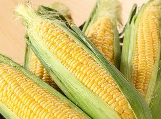 グリセリンやエタノールが抽出できるトウモロコシ