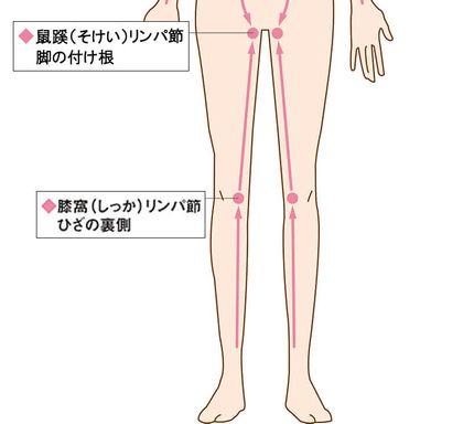 足の付け根と膝の裏のリンパ節の位置