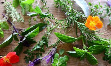 植物エキスが抽出できる自然の原材料
