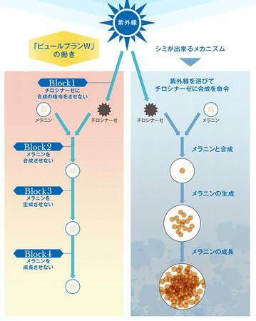 ピュールブランWによる肌内部での美白効果の説明図