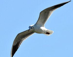 強靭な筋肉を持つ渡り鳥