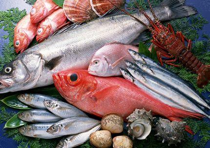 たんぱく質やヨード、チロシンが摂れる魚介類