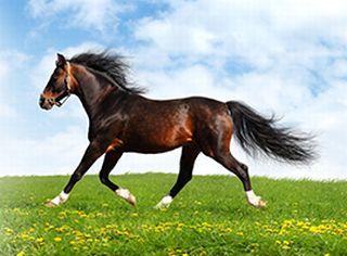 のびのびと健康的に育てられた馬