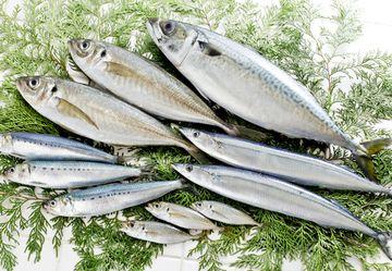 たんぱく質やビタミンなどが摂れる青魚