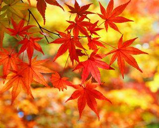 秋の風景(紅葉)