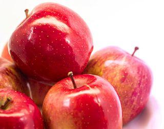 リンゴ幹細胞エキスが抽出できるリンゴ