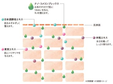 ナノ化コンプレックスとして配合された成分の効果