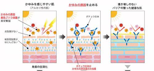 抗体入りダチョウ卵黄エキスの肌への効果の説明図