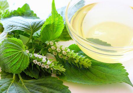 エゴマの葉、花とエゴマ油