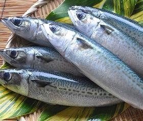 DHA、EPAが豊富に含まれる青魚