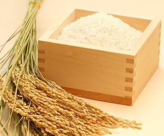 ライスパワーNo.11が抽出できる稲穂とお米