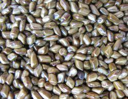 エビスグサの種子(ハブ茶)