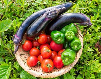 国内産の安心安全な食材