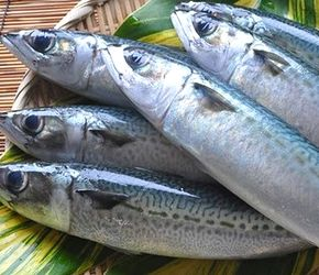 DHA、EPA豊富な青魚
