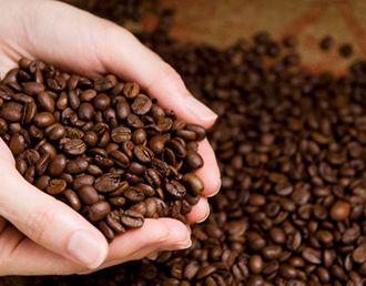 森のコーヒーの高品質な豆のイメージ