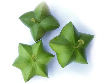 グリーンナッツの種子