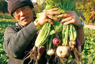 契約農家さんにて収穫された高品質な野菜