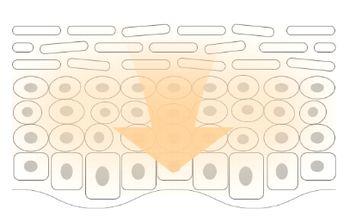 角質層の奥へ有効成分が浸透する肌の様子