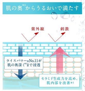 ライスパワーNo.11による肌への有効性の説明図