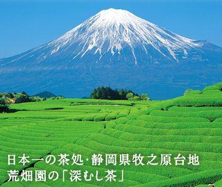 静岡県牧之原台地の風景