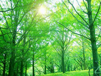 すがすがしく、爽やかな空気の森林