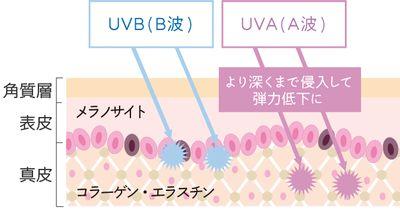 紫外線、UVBとUVAによる肌への影響の説明図