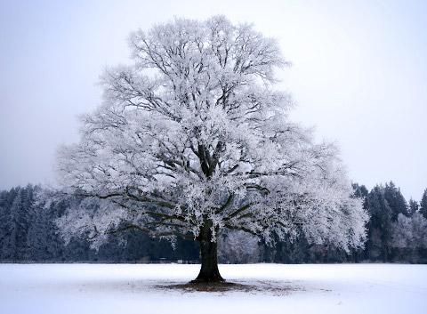 冬の寒そうな風景