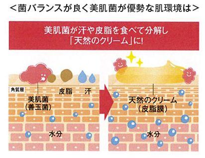 善玉菌、美肌菌が優勢な健康的な肌の説明図
