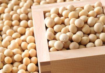 大豆イソフラボン豊富な大豆