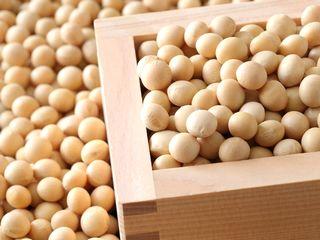 ビフィズス菌はっ酵エキスが生成できる大豆